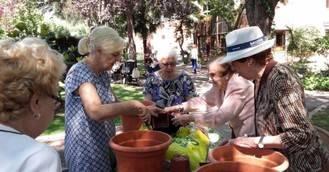 Madrid premia el trabajo de los usuarios en los huertos y jardines de residencias